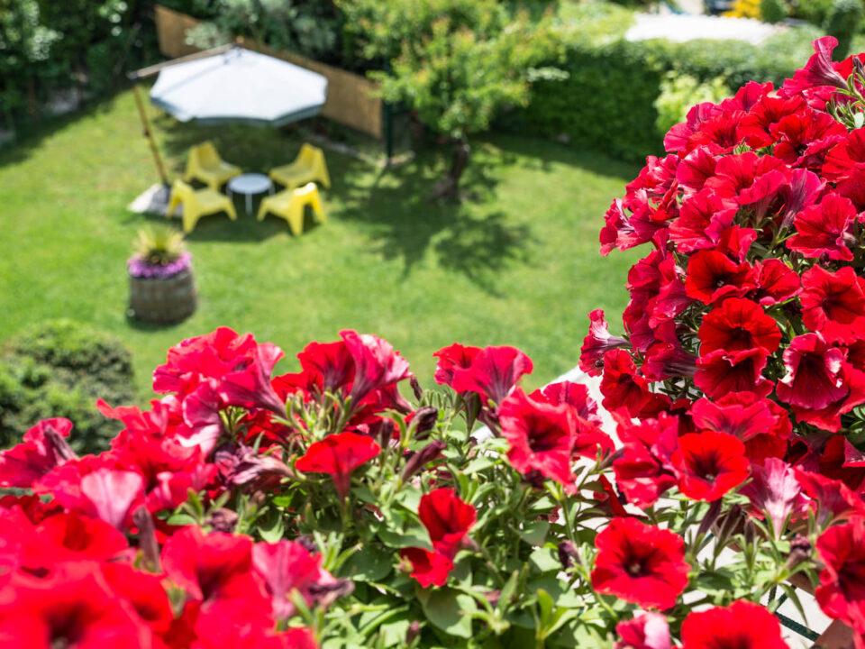 B&B e Casa Vacanze Il Girasole9 - cilentohome.com